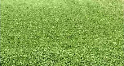 clip Wind in grass