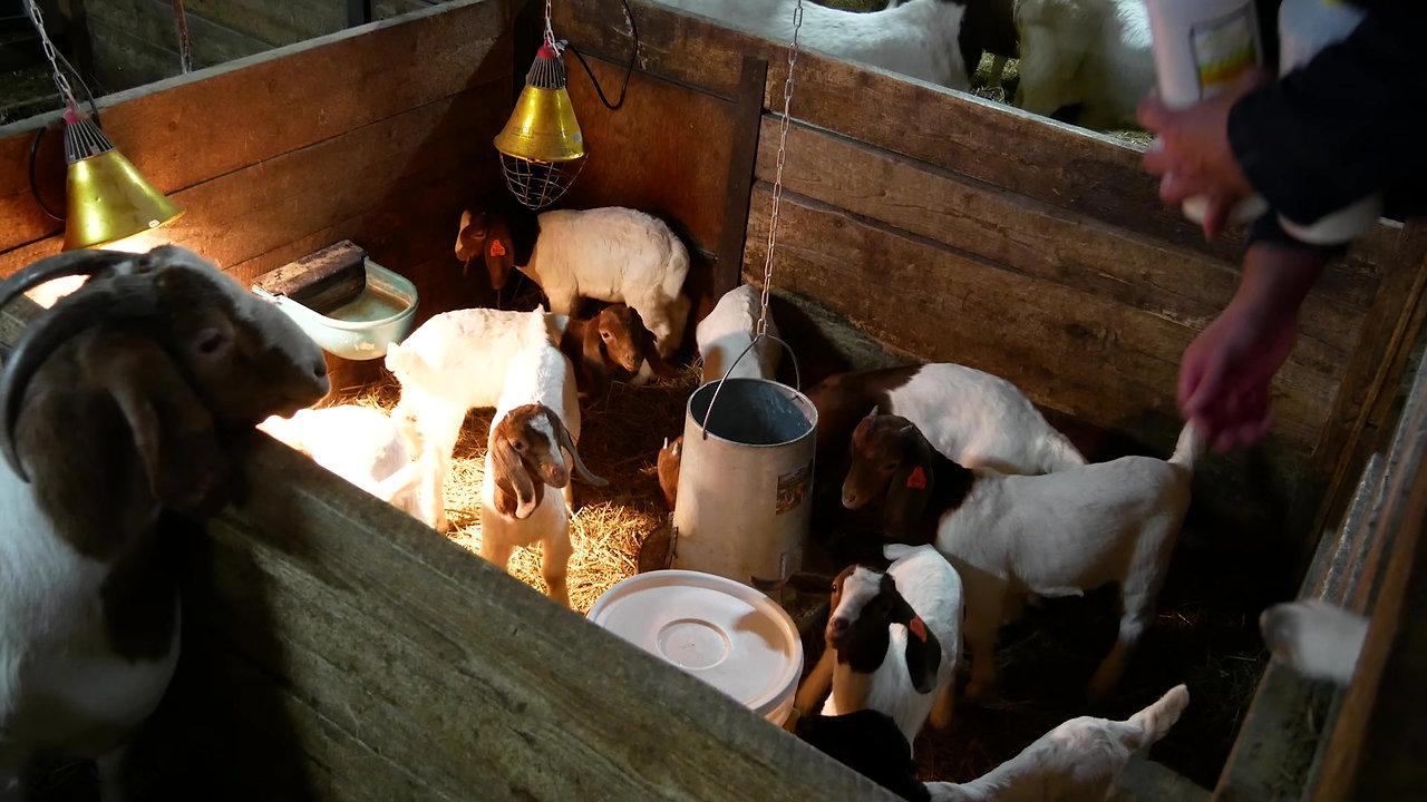 L'homéopathie animal - Labo Solidago