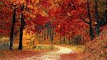 Autumn - 27231