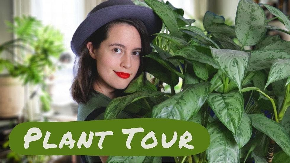 Houseplant Tour 🌿