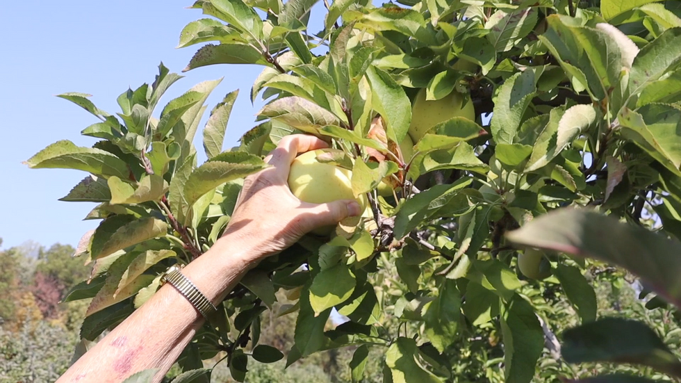 30 Second Ad for Pick-Your-Own Orchard