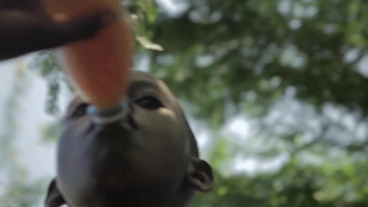 Des bébés stylés pour vaincre la soif !