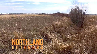 Minnesota Prairie Chicken Society President talks Prairie Chickens