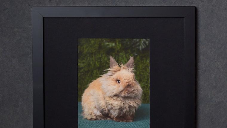 """12x12"""" Framed Fine Art Prints"""
