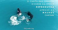 Baleias na Serra