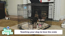 Tractor Supply and the AKC Present Tips for Crate Training Your Puppy