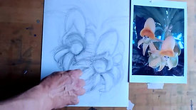 Drawing Cafe Orchids 14 6 21