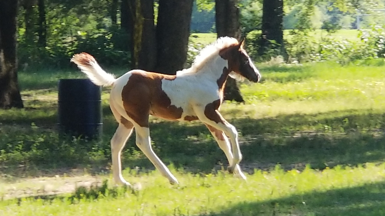 Videos of Horses Available