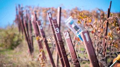 MiraLaguna Vineyard Removing Vines