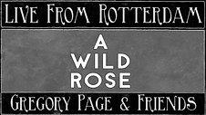 A Wild Rose