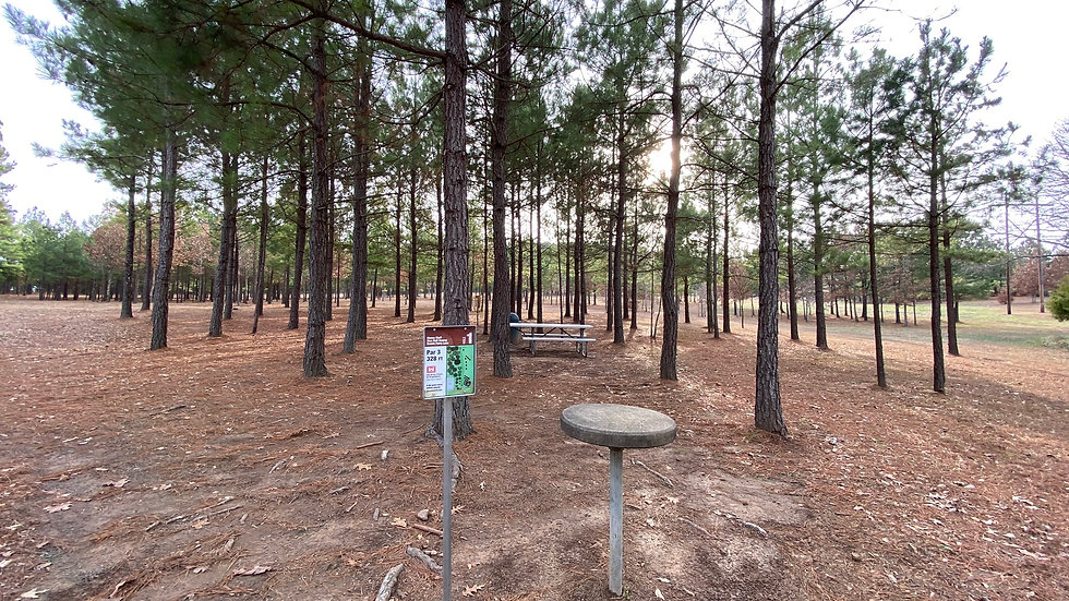 Mossy Bluff Disc Golf