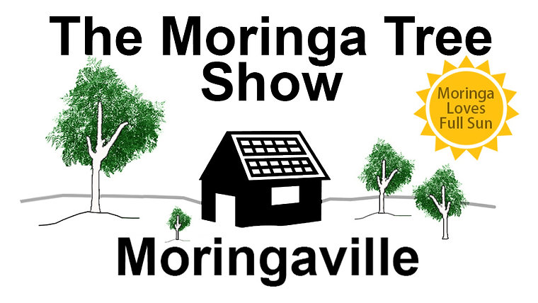 The Moringa Tree Show