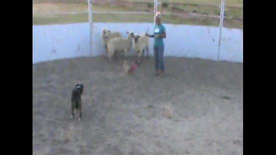 "Sadie Says ""'Hellooo' Sheep!"""