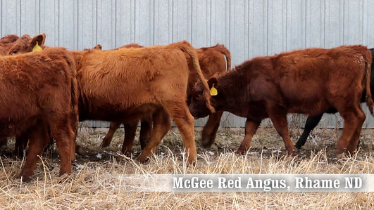 McGee Red Angus