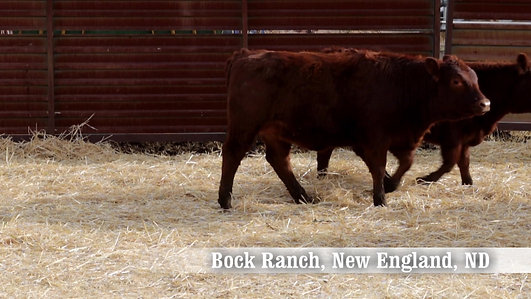 Bock Ranch