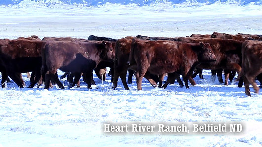 HEART RIVER RANCH