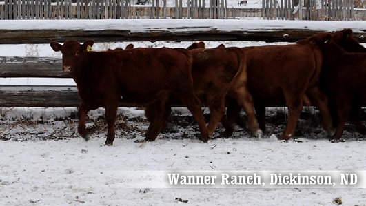 Wanner Ranch