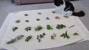 Video 1 Indoor Herb Garden for Pet Enrichment