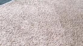 Limpeza de Tapete e carpete