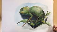 Time Lapse Chameleon drawing