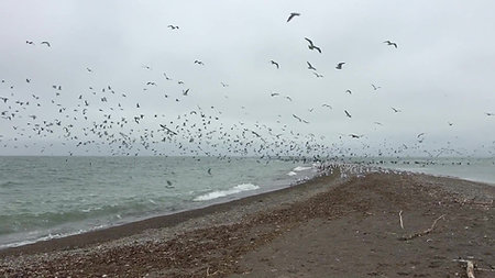 Seagulls on the Point