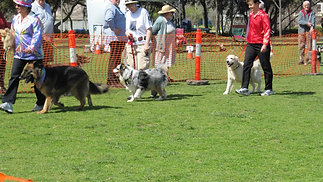 Mawson Lakes Dogs Day Out