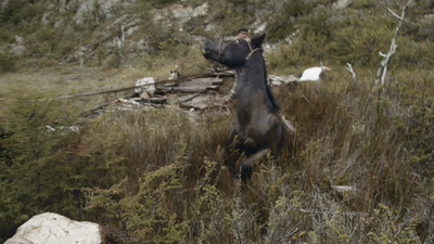 CNN/Amazon Prime: Gaucho: The Last Cowboys of Patagonia