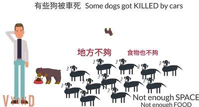 倉地-村落社區動物-絕育篇 Community Animal Desexing