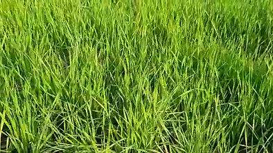 BARLEYGRASS FARM