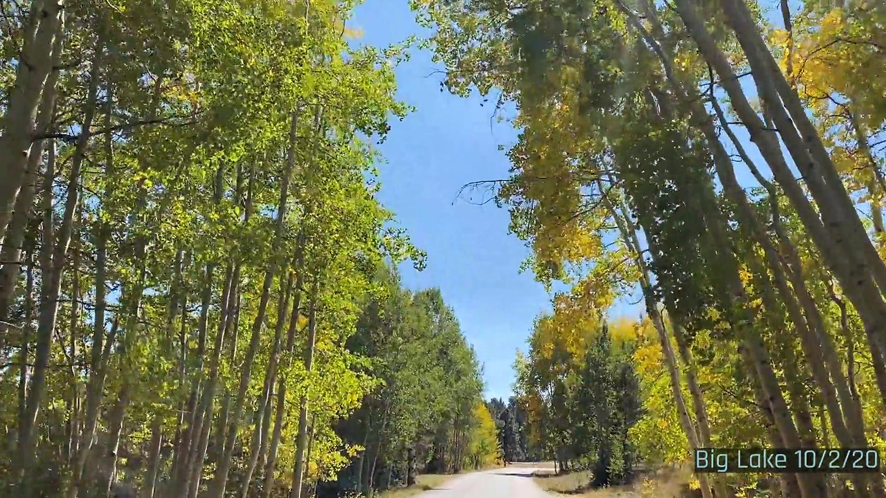 Fall in The Arizona White Mountains 2020