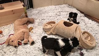 A Wurf - Alle Welpen haben ein neues Zuhause gefunden