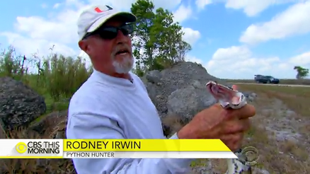 Python hunters take on Florida Everglades' snake problem