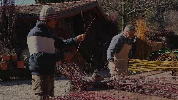 Breve storia di un coltivatore di salici