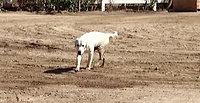 Moses Horse Trough