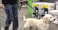 Tristan in Lowes