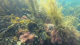 Marazion Coastal Tour, marine life