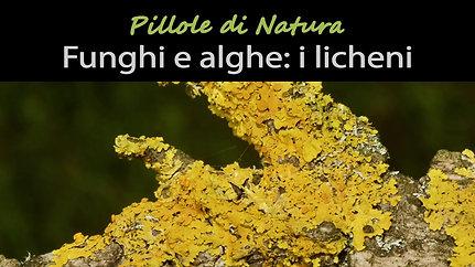 Funghi e alghe: i licheni