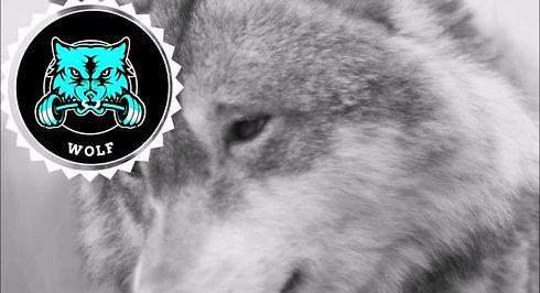 Wolf24 Image Video