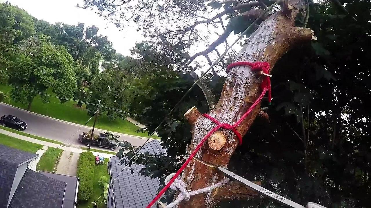 Royal City Tree Care Videos