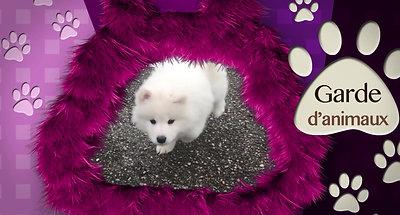 Vidéo Toilettage Canin Chiens Chats Montbrison Garde d'animaux en famille , visites a domicile, toiletter, loire 42