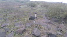 Marine Iguanas-Nasca Boobies-Albatross