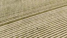 Sandfiller Søllerød Golf 2