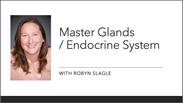 Masterglands/ Endocrince System Part 2