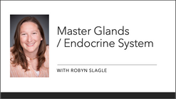 Masterglands / Endocrince System Part 2