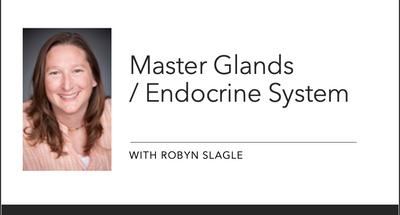 Masterglands / Endocrince System Part 2