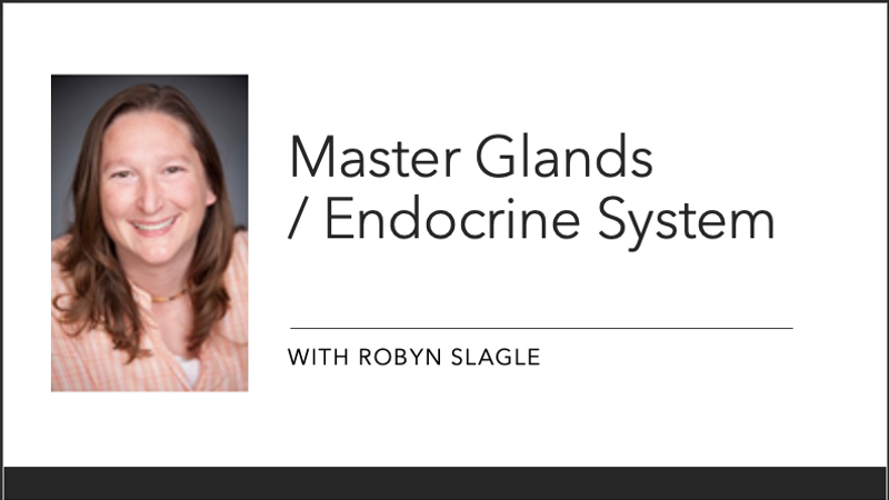 Masterglands/ Endocrince System Part 2