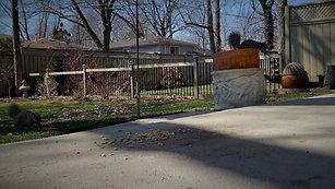 The Squirrels In My Backyard