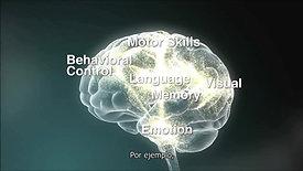2. Las interacciones Servir y Devolver dan forma a la arquitectura cerebral