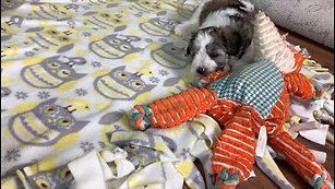 Emma's & Paddington's pups - 6wks #3