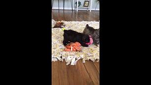 Fudge & Rolo's pups